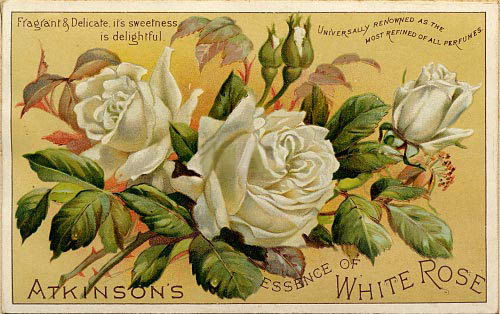 Left: Atkinson's White Rose was Alexandra's favorite scent.